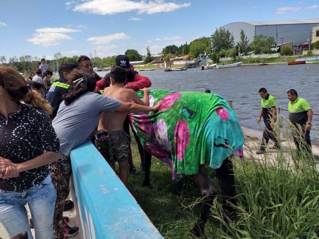Rescate de un equino que cayó en el Canal de la Génova