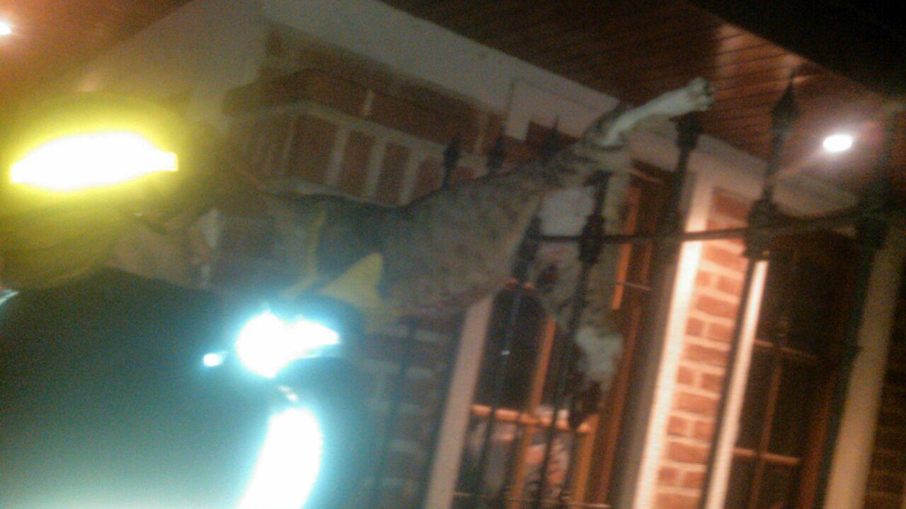 Personal de Bomberos rescató en la madrugada de este lunes a un gato que se encontraba clavado en la reja de una vivienda de la calle 150 entre 8 y 9.