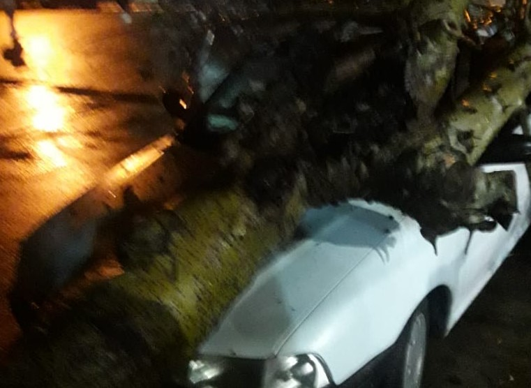 Árbol cayó sobre un auto en la Génova