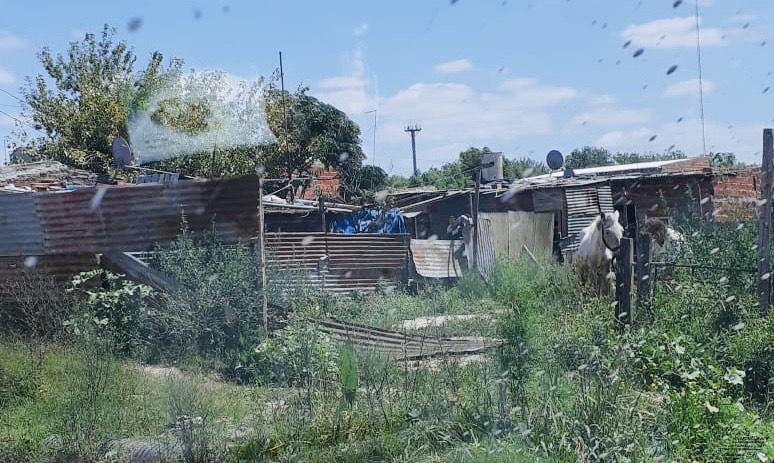 Denuncian tenencia de animales en malas condiciones: Al sol, sin agua y sin alimento