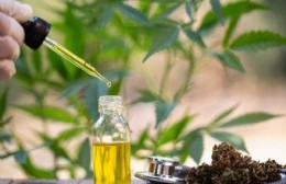 """Cannabis medicinal: """"Sería un gran avance en salud pública y en calidad de vida"""""""