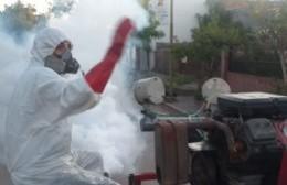 Se refuerzan las acciones de fumigación