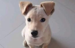 "Perro perdido: Una familia espera por ""Roly"""