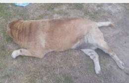 Murió perro atropellado en 175 entre 29 y 30: el cobarde automovilista huyó