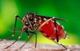 El mosquito transmisor.