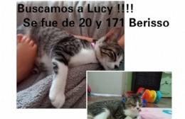 """Una familia busca desesperadamente a su gata """"Lucy"""""""
