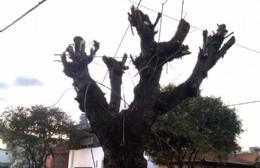 Tras denuncias vecinales, intiman a la comuna para que suspenda la poda de árboles