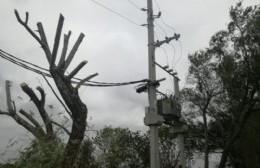 Vecinos agradecen la poda de árboles en 19 y 152