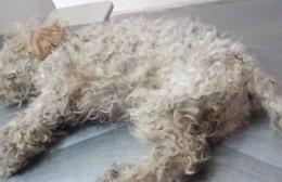 """Aumento de animales domésticos en Berisso: Tiburzi apeló a """"un urgente ordenamiento"""""""