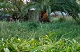Se agudiza la preocupación por los terrenos abandonados en 9 y 157