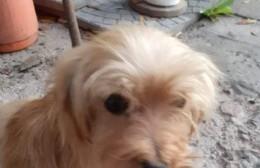 Vecinos quieren dar con el paradero de la familia de una perra rescatada en el acceso al Puerto