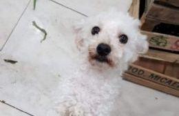 Buscan al perro Ramón