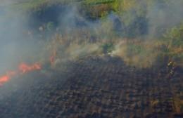 Intensa labor de los bomberos para combatir incendio forestal en el acceso a la Bagliardi