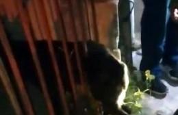Rescataron perro callejero que quedó atrapado en las rejas de una vivienda