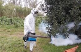 Avanzan los trabajos de desinfección y fumigación