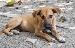 Atender la problemática de los animales es responsabilidad de la Secretaría de Salud